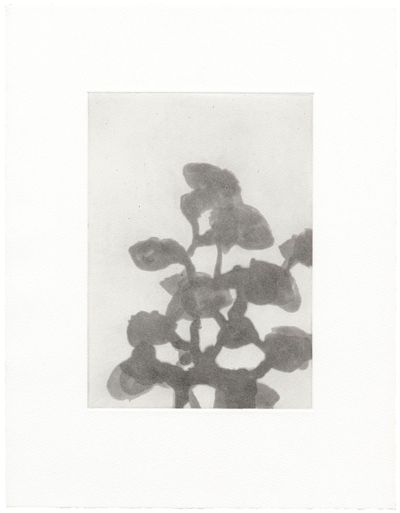 christianeloehr aquatint 02